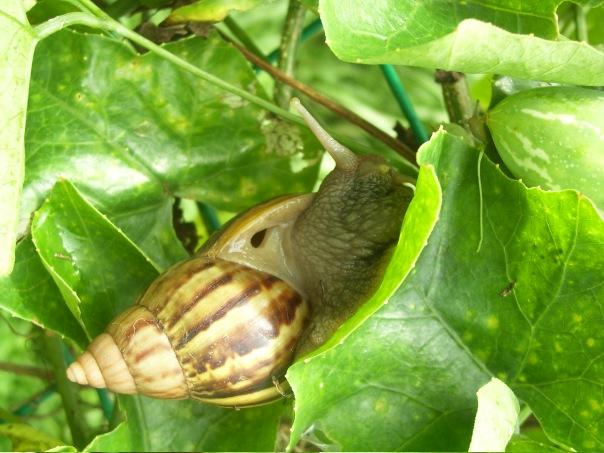 snail, spiral, pattern, singapore