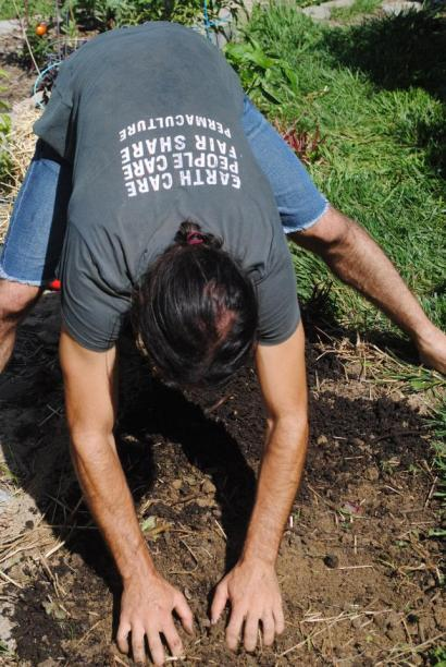 lightly tilling soil by hand as it has been improved that much for direct seeding in terrace garden, Ohio, USA 2013