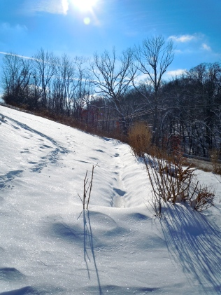 Swale in Winter capturing snow melt as well, Ohio, USA, 2010