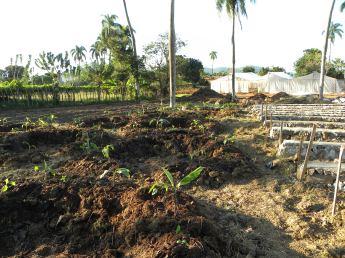Banana Circles and terraces, Dominican Republic, 2013