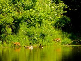 Wildlife at Treasure Lake, Kentucky, 2013