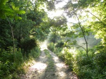 Forest path at Treasure Lake, Kentucky, 2013