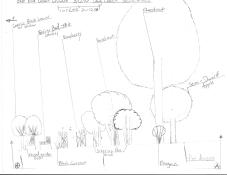 Hand Drawn Urban Food Forest, Section View, Cincinnati, Ohio, USA 2009