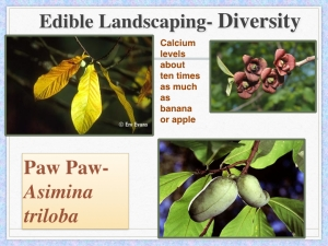 sample slide- plant choices