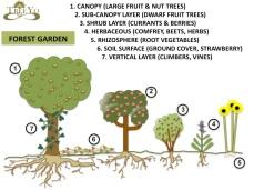 Forest Garden Schematic