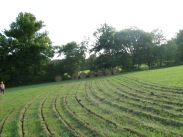 Keyline pasture renovation, Tennessee, USA, 2009