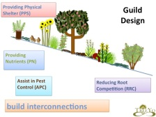 Guild Design Slide