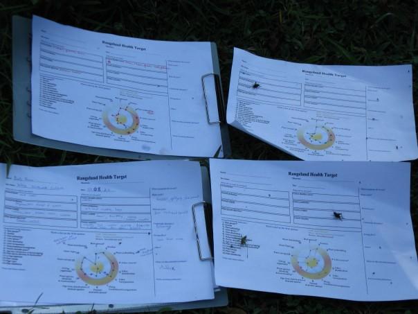 Bullseye test revealing overgrazed pastures