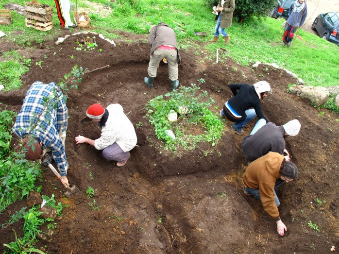permaculture rain garden