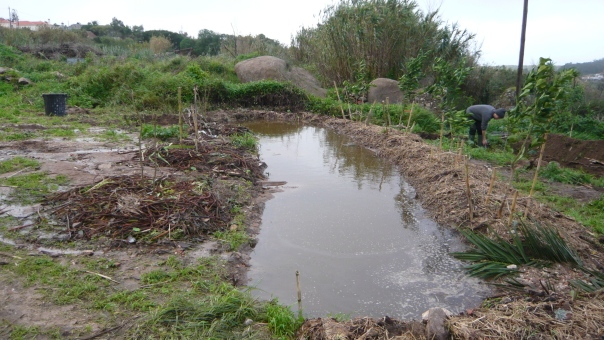permaculture swale with water