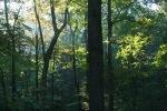 Treasure Lake Forest, Kentucky, USA