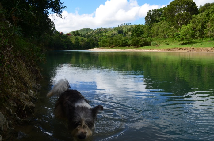 The river and Piggy