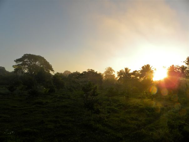 taino organic farm- the sunrise on the final day of the year