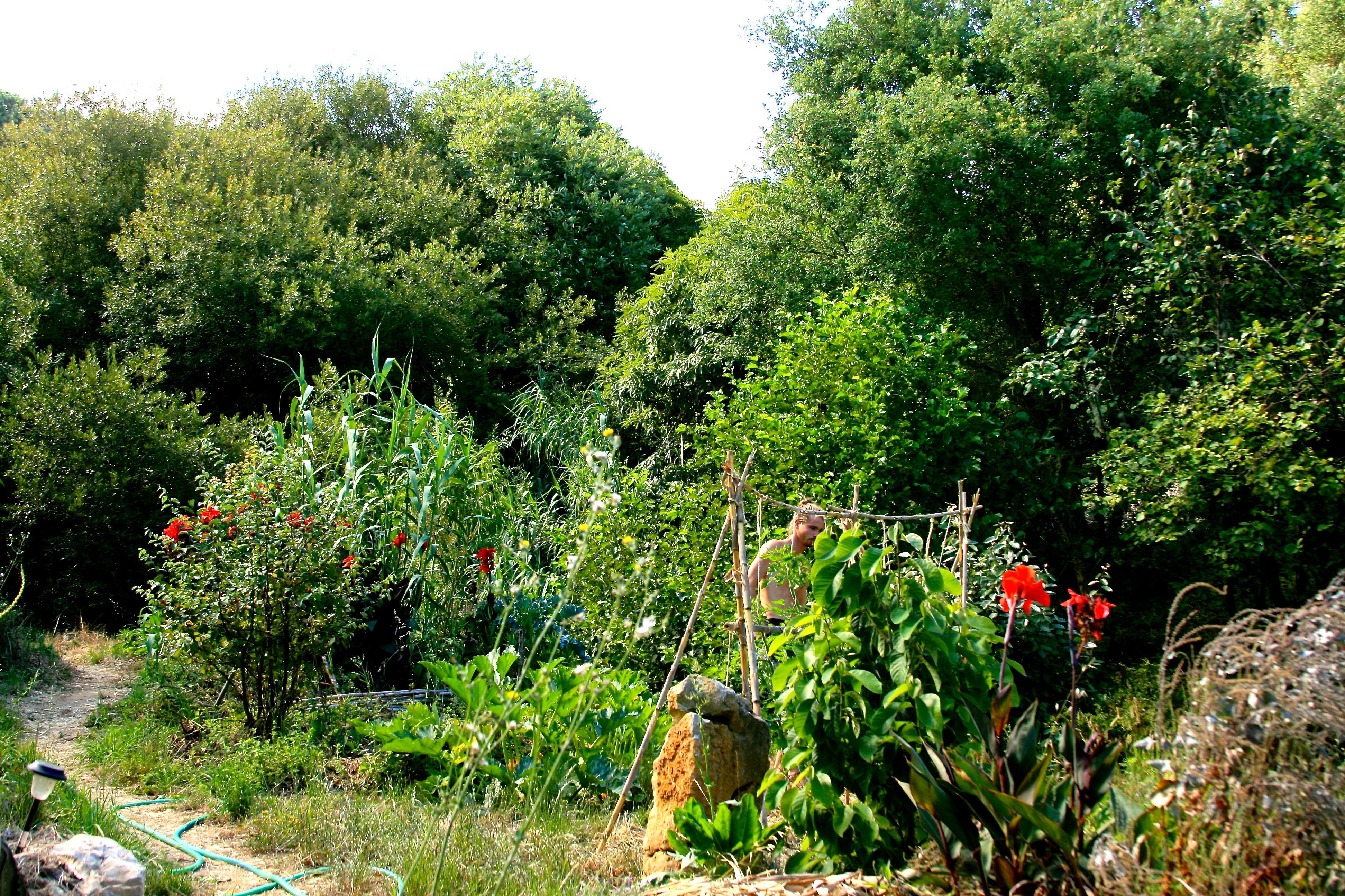 Drylands Corridor Planting