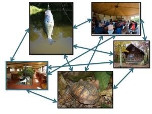 the integrated business of the lake, the cafe, the forest and farm, the eco-tourism destination, and the educational center