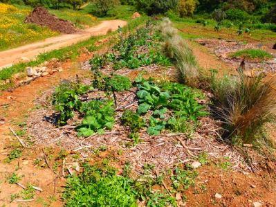 hedgerow herdade de Lage- design led to implementation