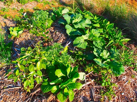permaculture-guild-with-feijoa
