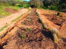 permaculture hedgerow establishment