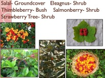 sample slide from food forest course