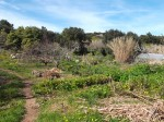 The Serpent forest garden at Terra Alta, annuals and food forest mixed