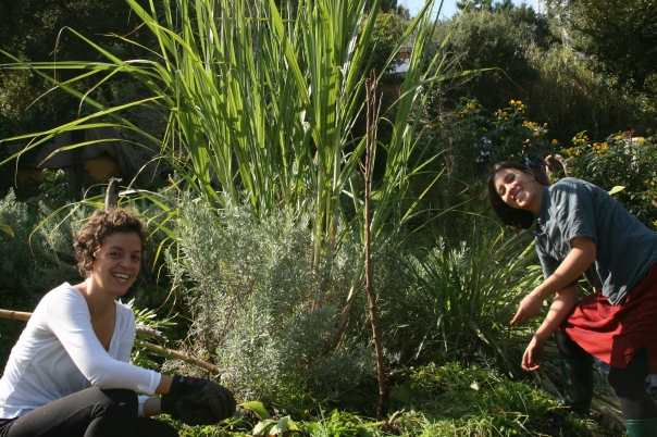happy planters in the serpent garden planting a nectarine and guilding