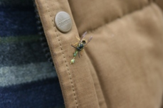 Wasp on Doug's jacket a nice suprise and with a pest in its mouth proving the benefit of wasps