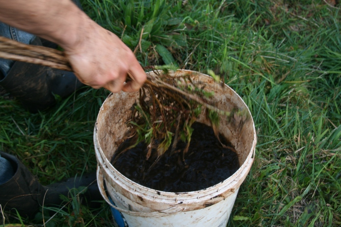 Putting the compost extract out with branches!