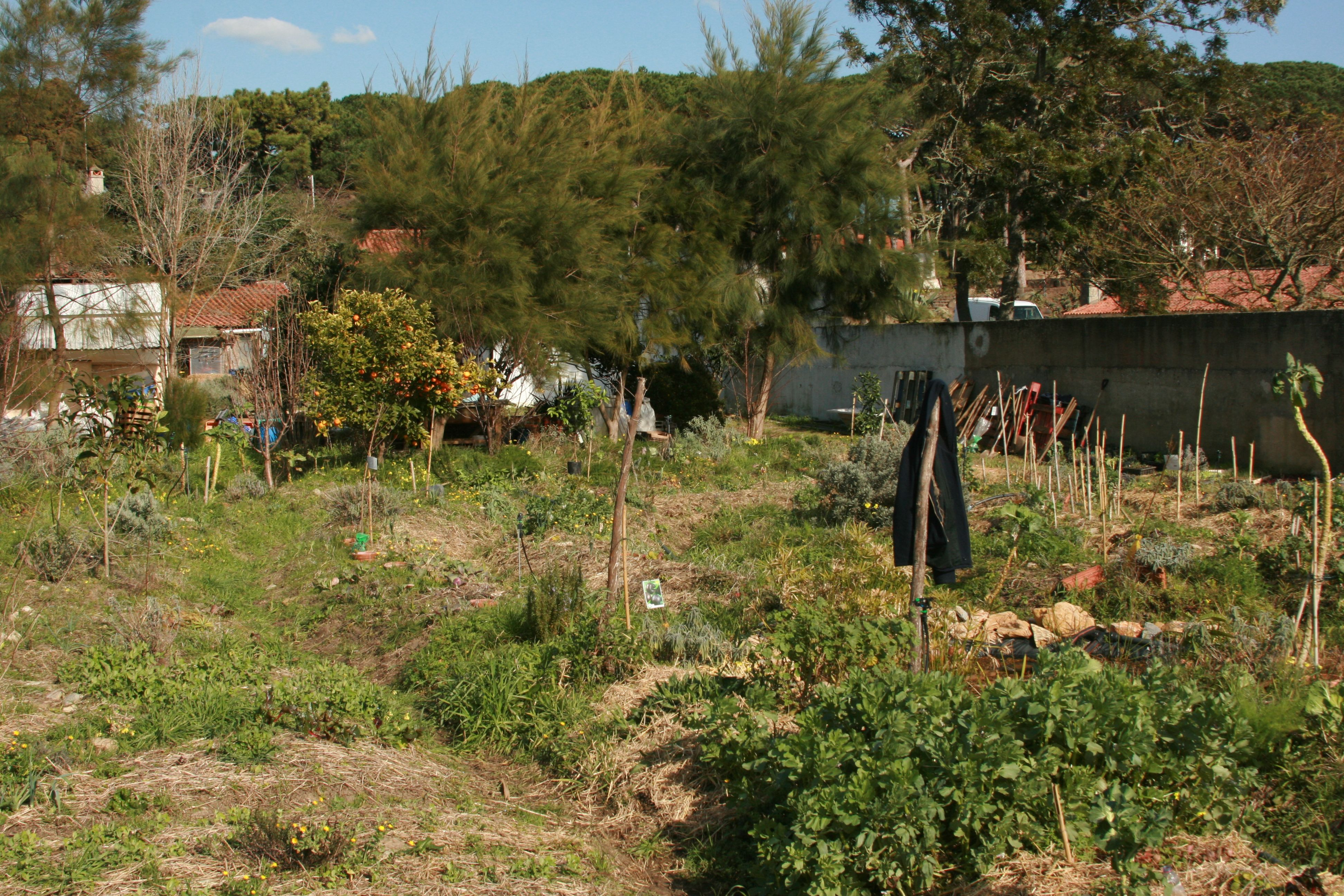 Nome Garden: February 2015: Food Forest Course, Colares, Portugal