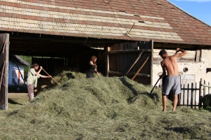Storing the hay in the loft