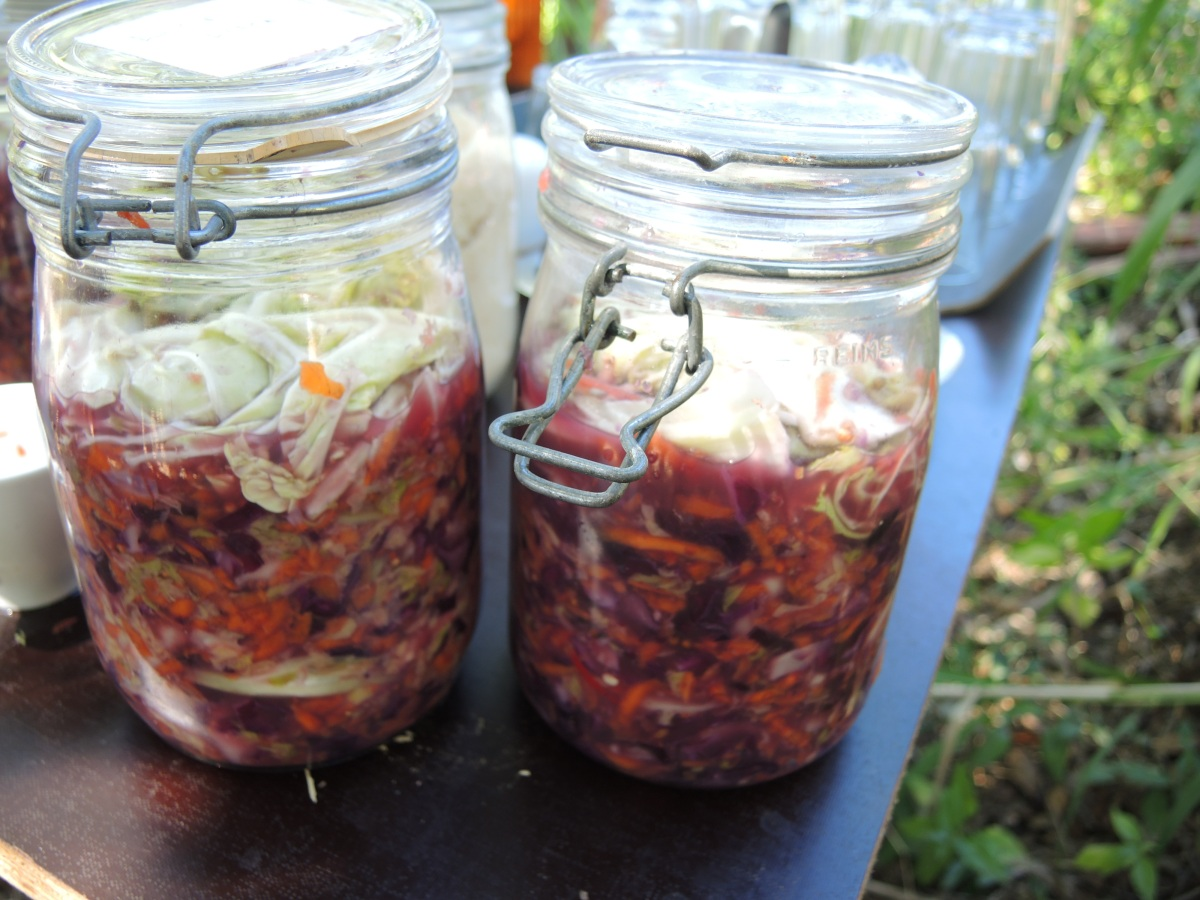 Gringo Kimchi- An Asian/European Fusion of Sauerkraut | A Permaculture Design Course Handbook