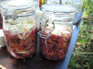 our lovely gringo kimchi
