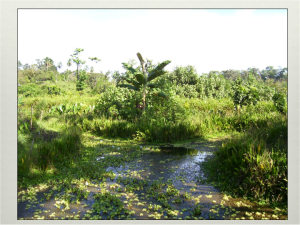 Chinampas in Panama, a system of reflection during the course