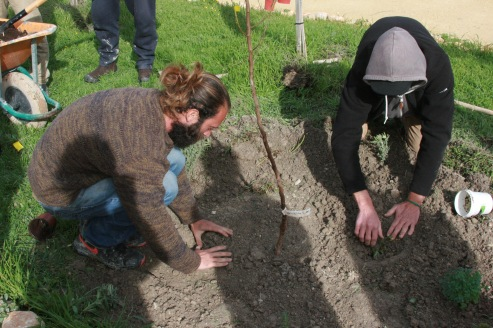 tree planting at Suryalila, one of our activities for hands on!