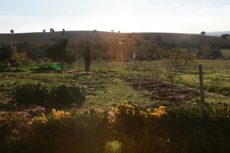 the garden hedgerow, some of the hundreds of trees planted this fall/winter