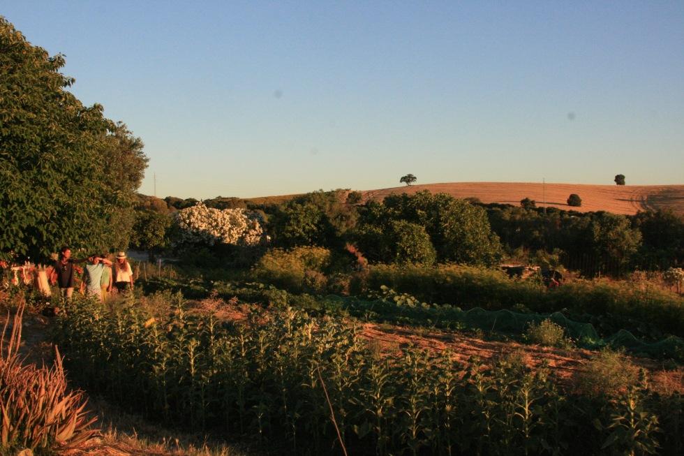 The organic garden at Suryalila
