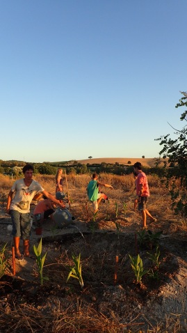 the crew enjoying the sunset vibes and planting