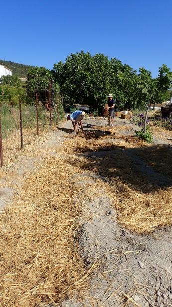 the final mulching of the sunken beds