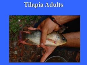 Perma-aquaculture.039