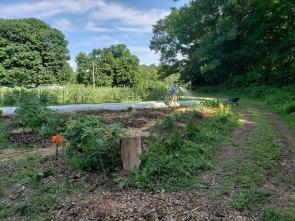 Treasure Lake Hedgerow/ mushroom garden