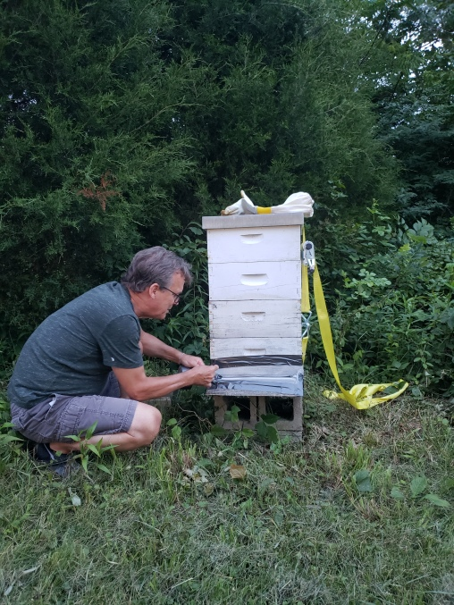 Gil, such a generous person, getting ready to transport a beehive from his land to the lake to support both the garden and ecology here
