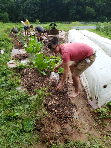 permablitz implementation of mushroom beds in hedgerow. it was almost all people from my town of Petersburg, Ky, 2018