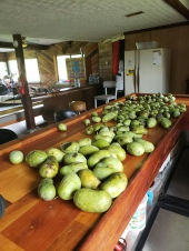 just a bit of the paw paw on the bar, giving lots away