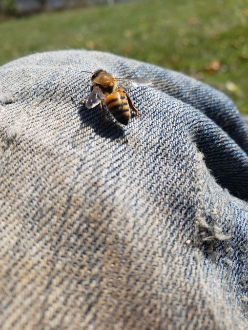 One of our bees landed one on a cool fall day