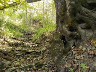 rock dams edging off large tree on the edge of a stream at Treasure Lake, KY