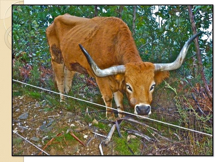 TreeYo EDU-Artikel: Befriedigung der Grundbedürfnisse von Tieren auf Musterebene